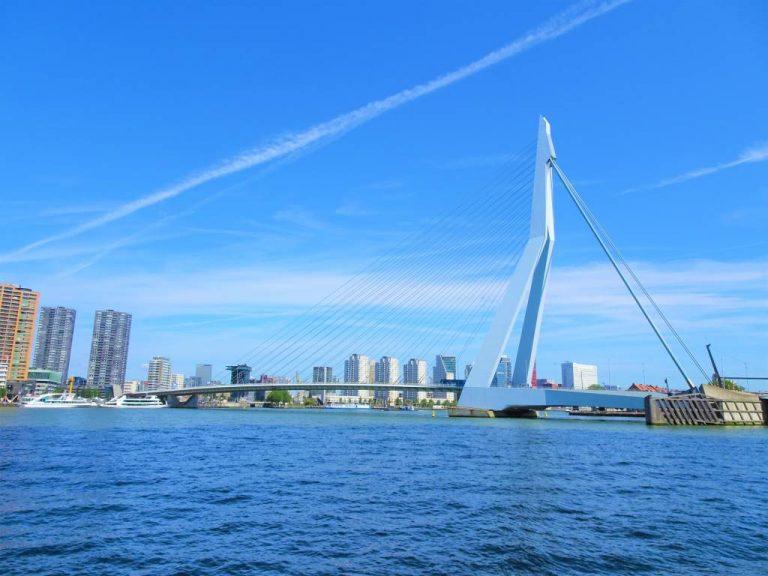 erasmusbrug erasmus bridge rotterdam zwaan swan architecture